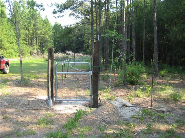Chicken yard with fence and gate