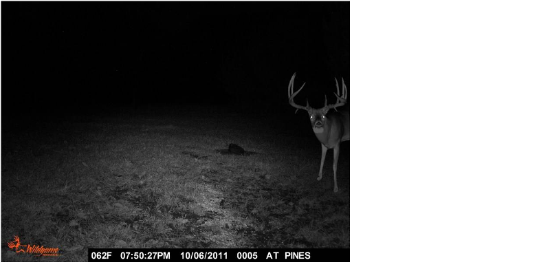 The right way to punk your buddy's trail camera