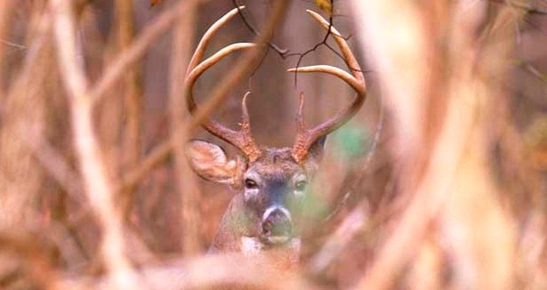 Science Of Deer Vision