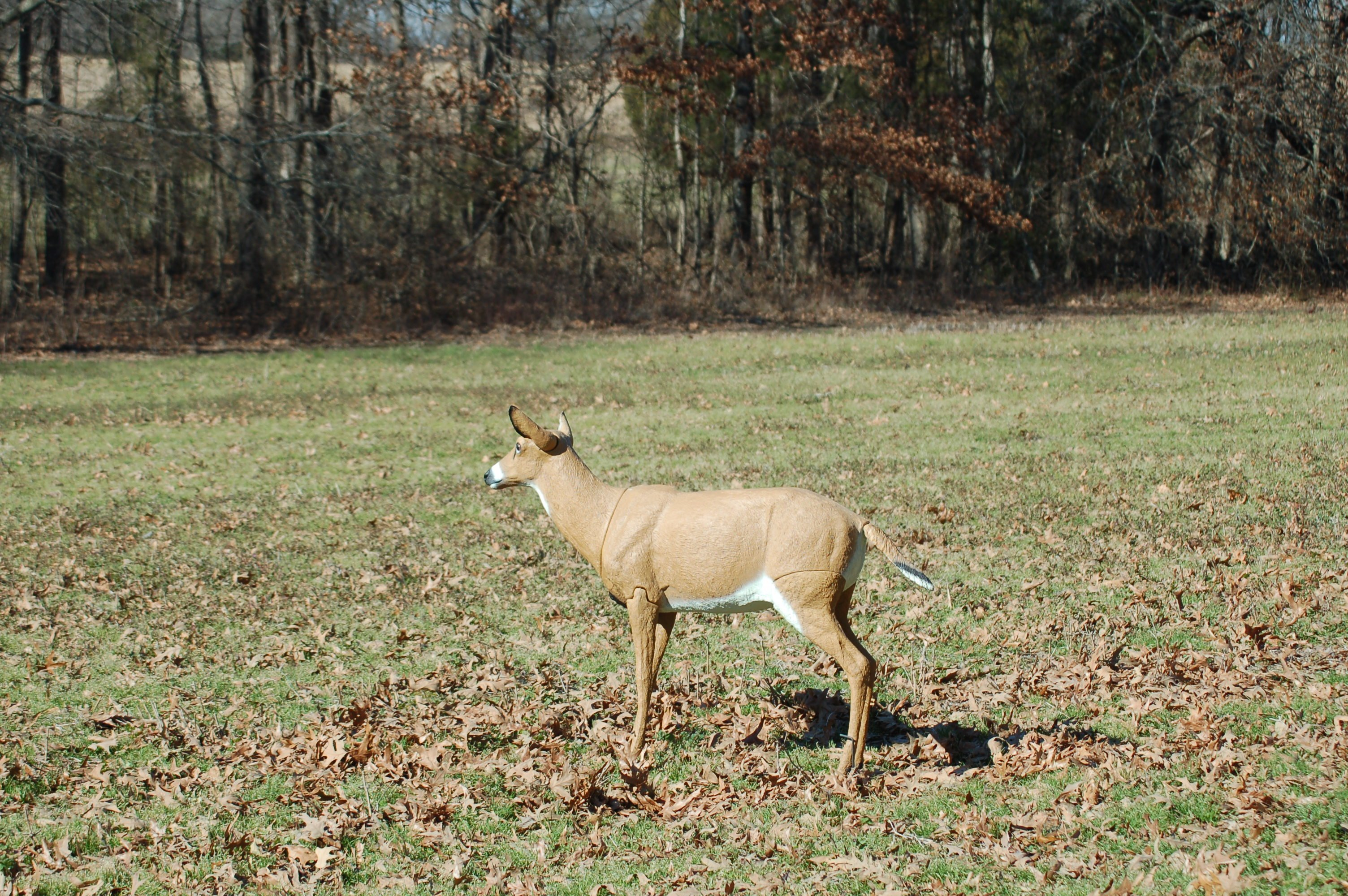 So You Want to Try a Deer Decoy