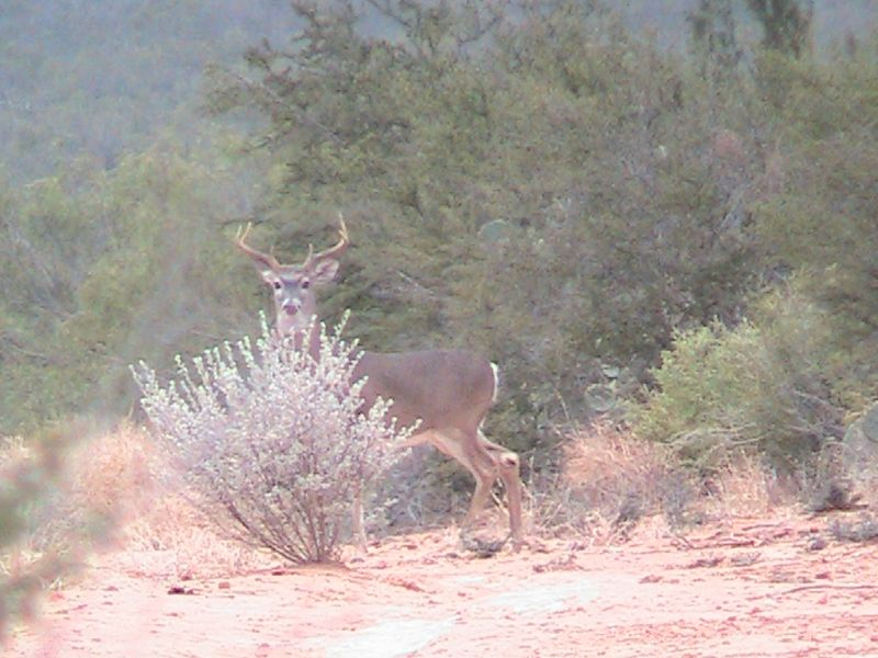 Mexican Whitetails: Good Hunting Awaits Just Across the Border