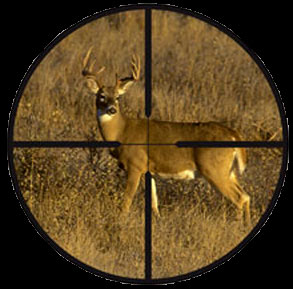 deer-in-a-rifle-scope