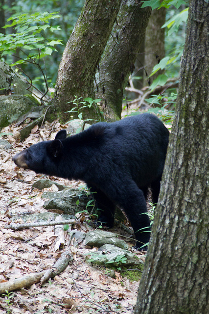 Man in a Tree Stand Comes Face to Face With a Bear. Wait For It…