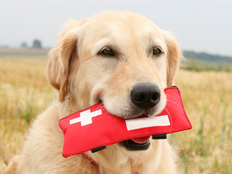Resources for Animal First Aid