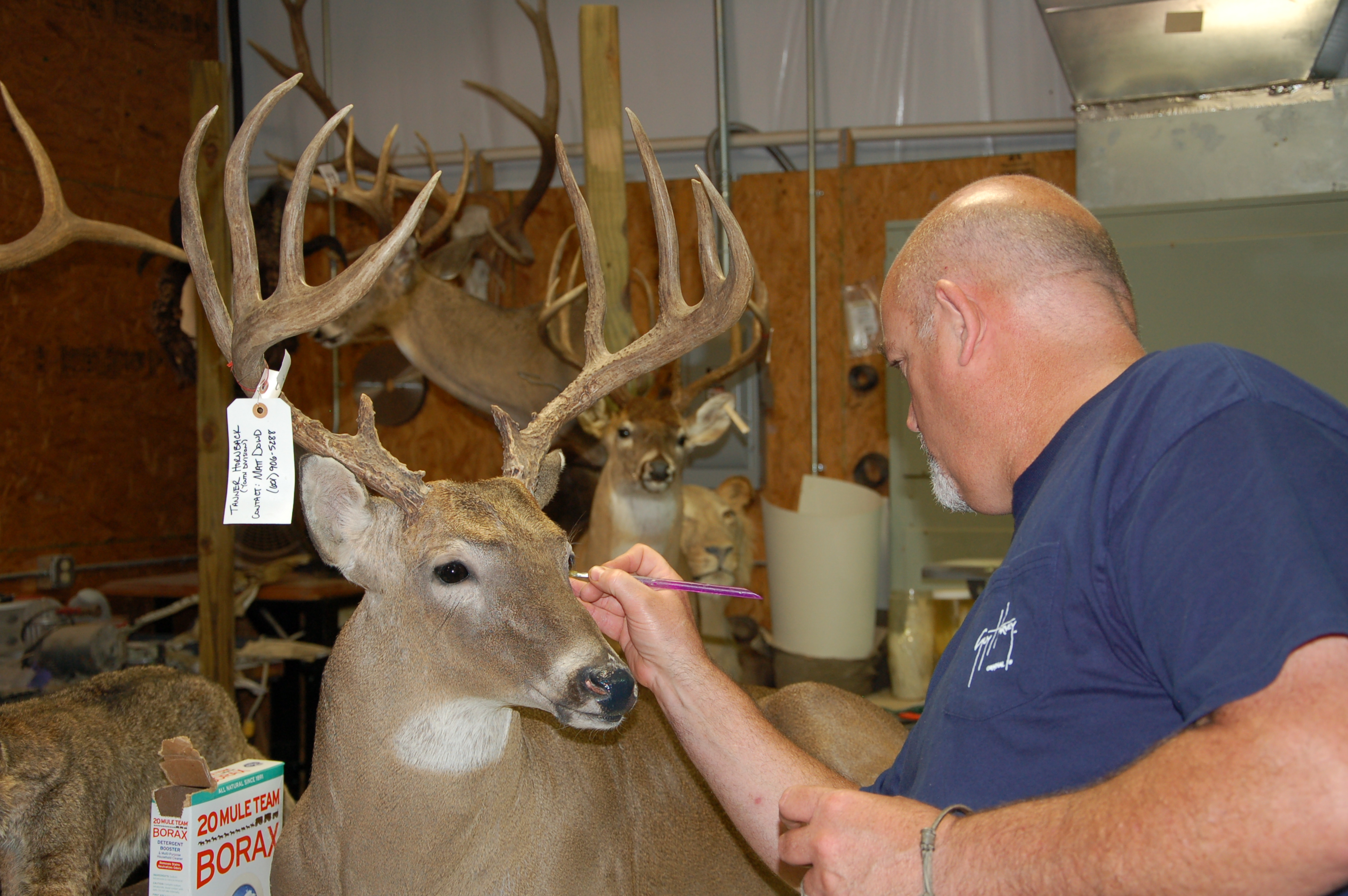 Best Blades for Deer Head Caping