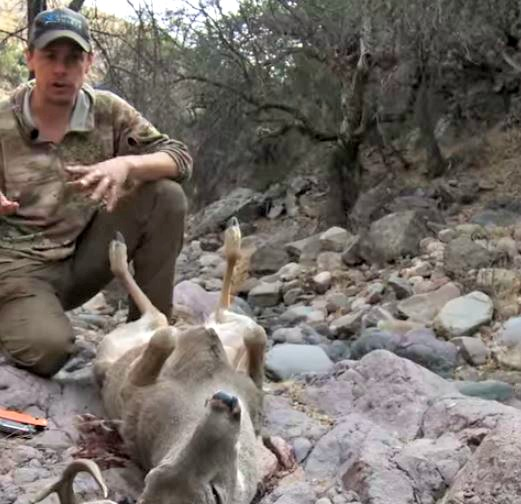 VIDEO: How To Field Dress A Deer. Got Any Cool Tricks?
