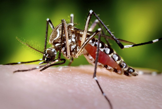 Expert: Chikungunya Could Infect 1 million in the first 90 Days of a US Outbreak
