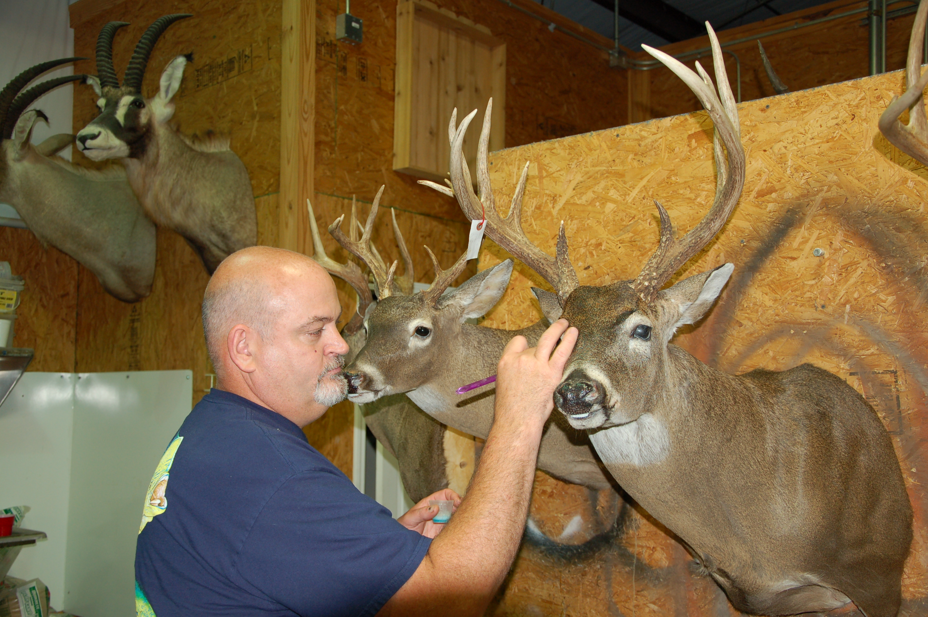 Tips for Quality Taxidermy Results