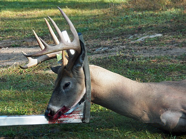 GameXtractor Keeps the Head and Antlers Off the Ground While Dragging