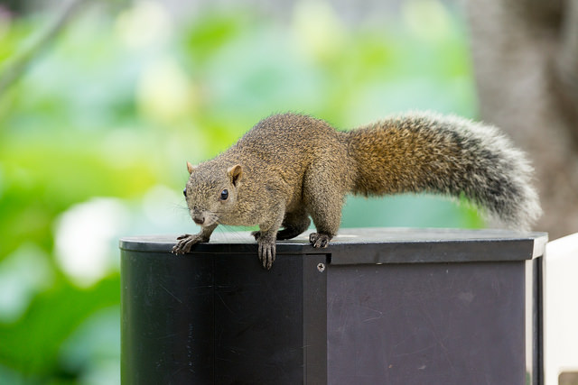 Planning to Eat Squirrel when TSHTF? Think Again!