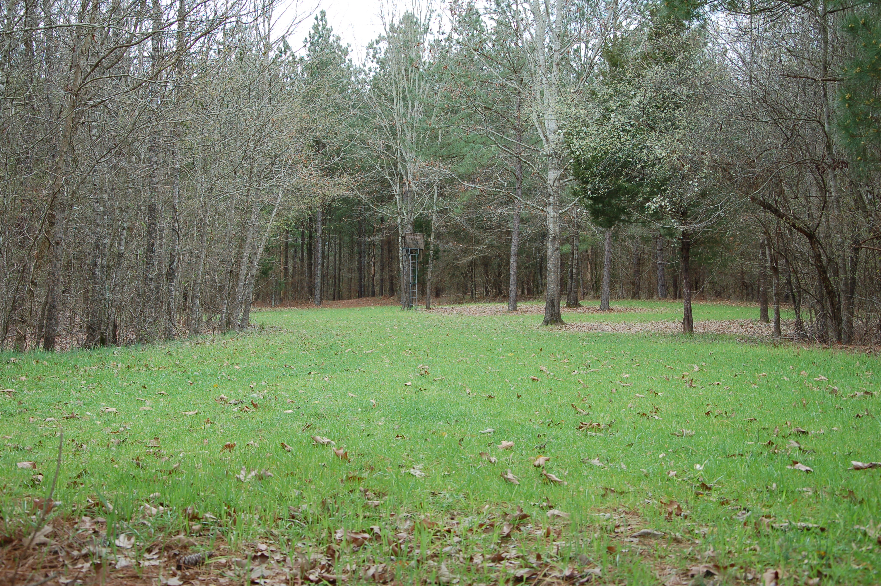 Considering Spring Wildlife Food Plots