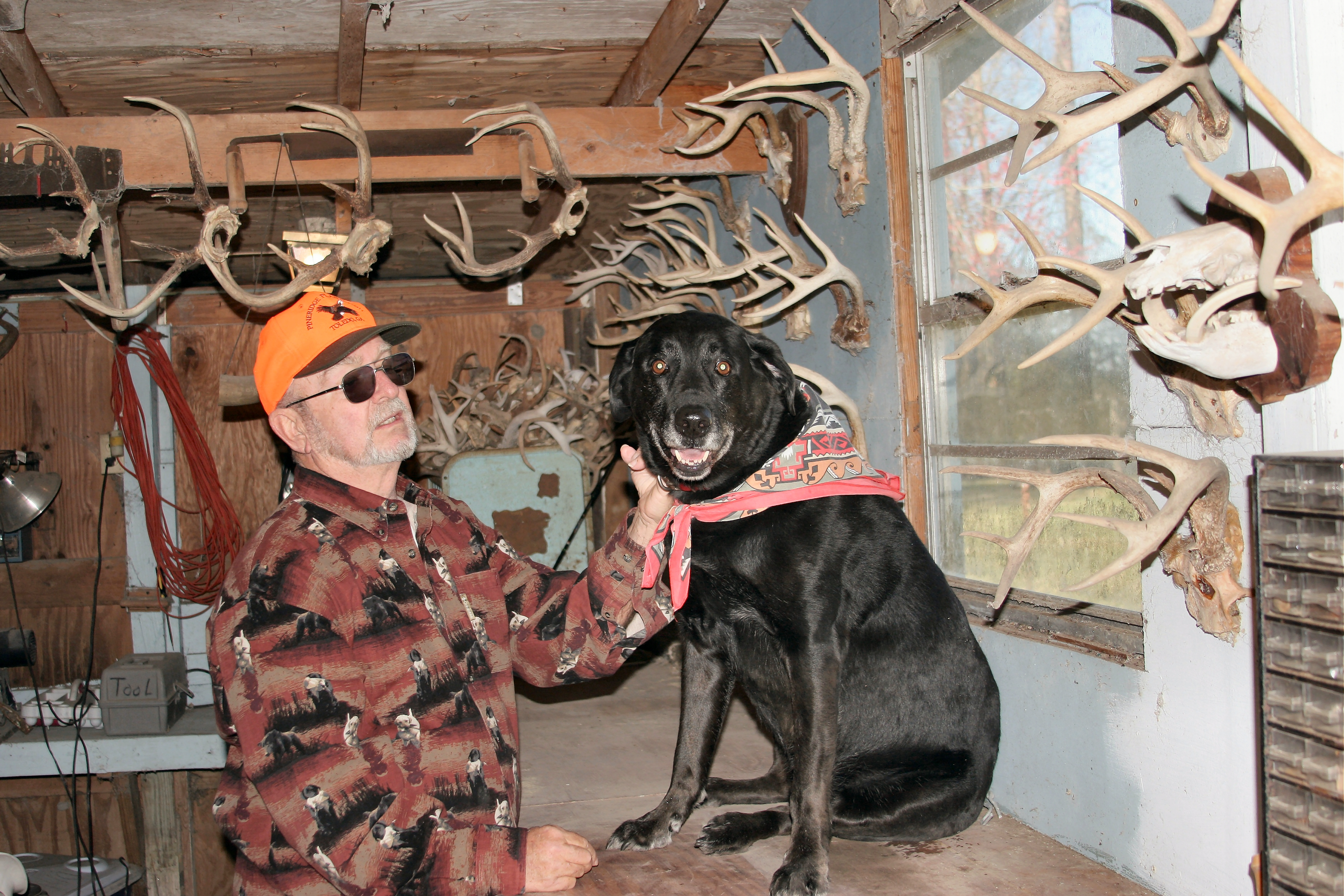Living Off the Land: Gun Dogs for Finding Deer and Wild Hogs
