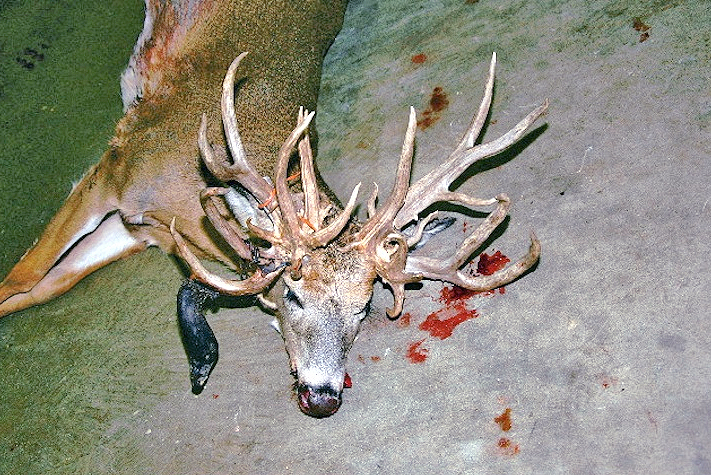 30-point Non-Typical Whitetail – Doe!