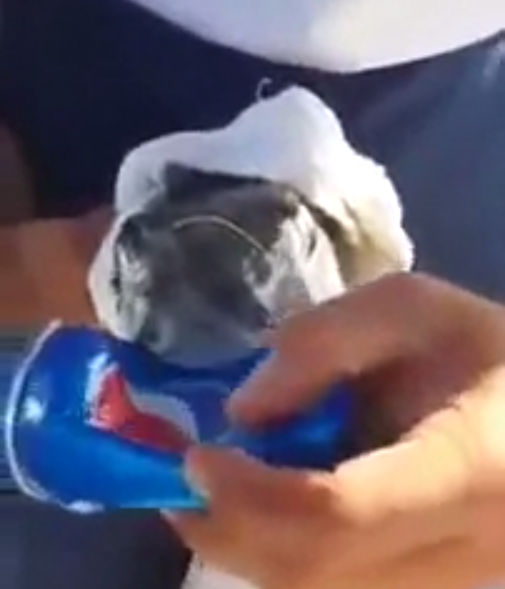 A Fish Biting an Aluminum Can. What?