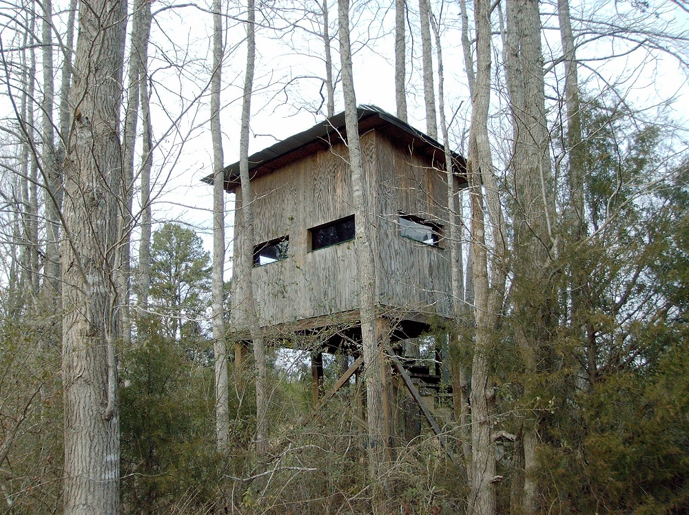 Is There An Ideal Tree Stand Height Alloutdoor Com