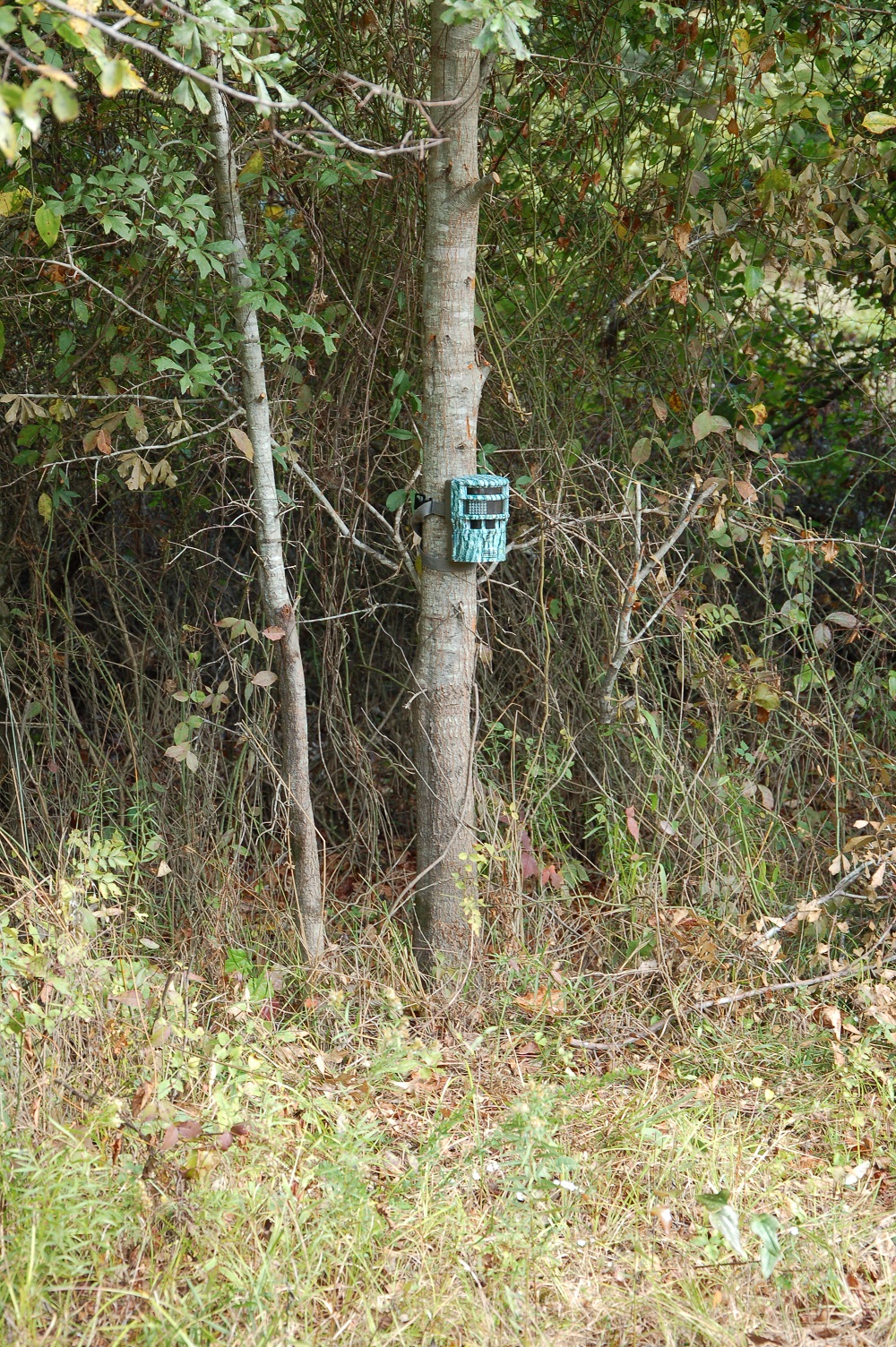 Trail Camera Hanging Hotspots
