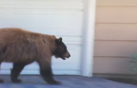 Terrifying Encounter for a Man and Bear