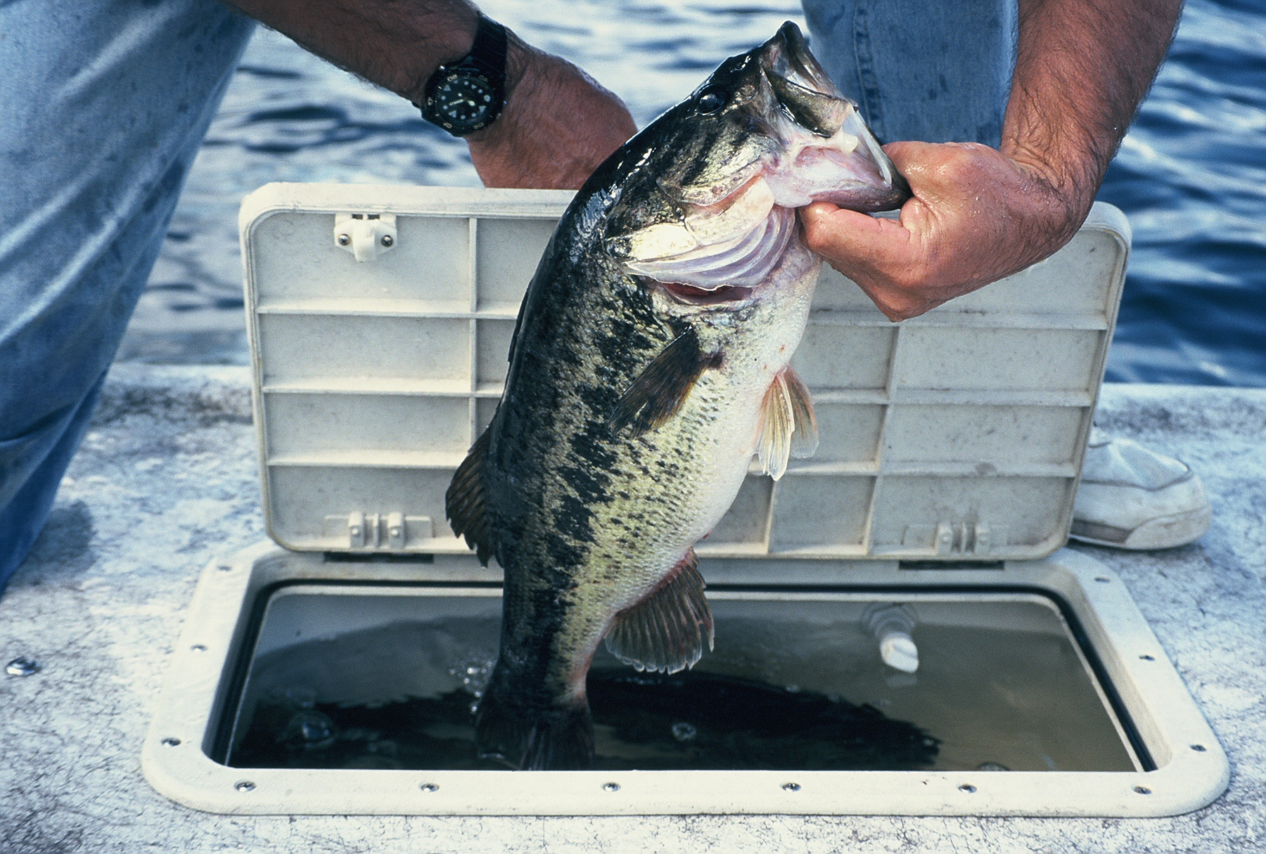 Lure Speed Critical for Pre-Spawn Bass Success