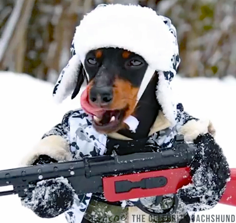 Watch: Celebrity Hunting Dog (Not What You Expect)