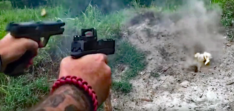 Watch: Pokemon Hunting With Real Guns