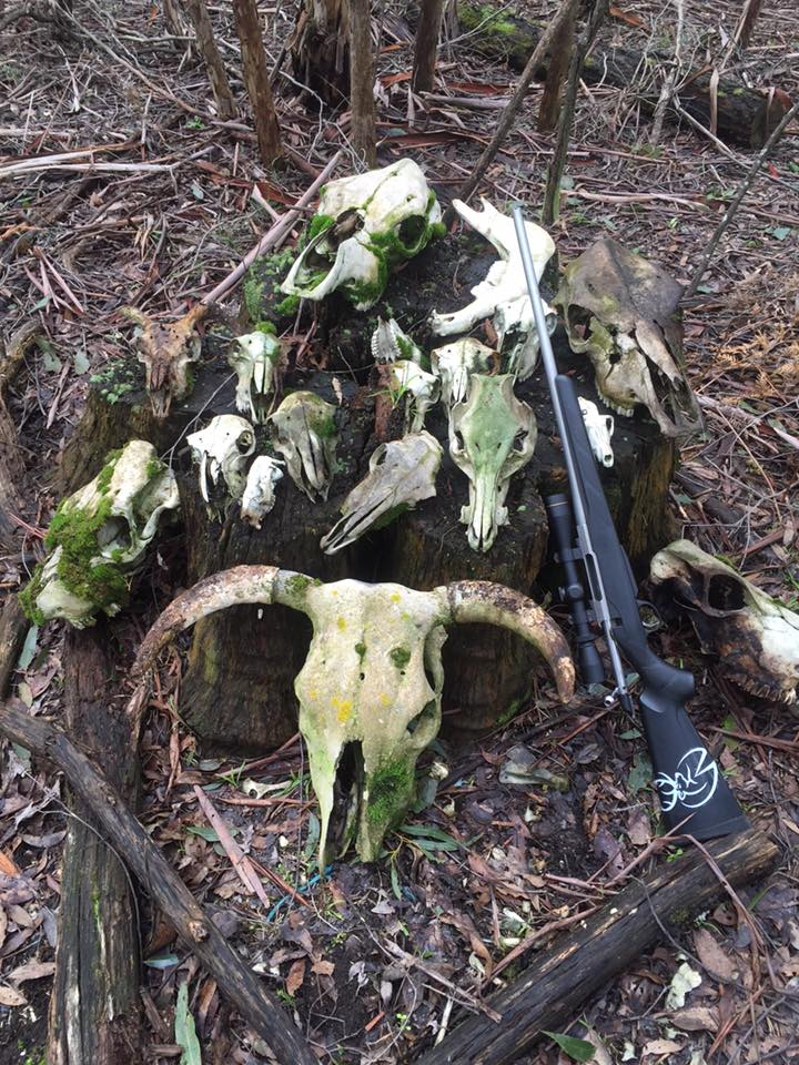 Hunter Finds a Collection of Skulls in the Boonies