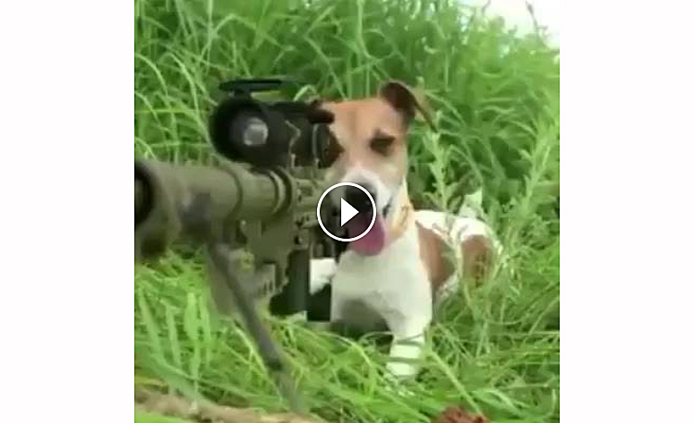 Video: Sniper Dog Targets the Wrong Squirrel