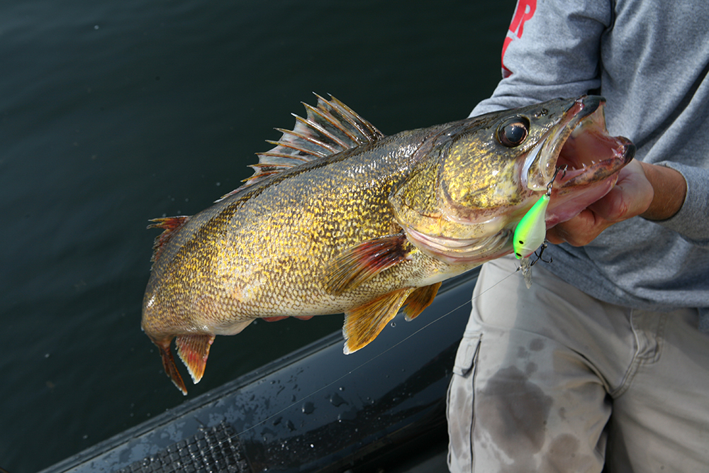 Try These Tips for Biggest Fall Walleyes, Part 1