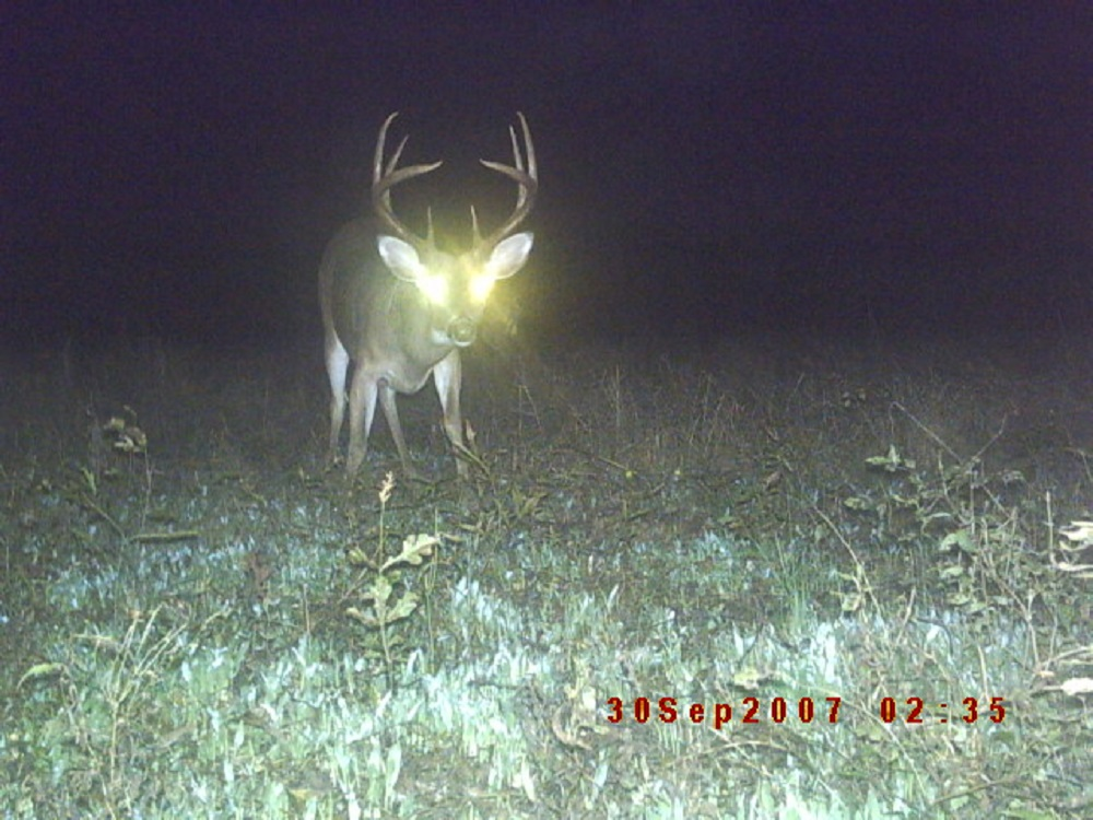 Time to Think Trail Cameras