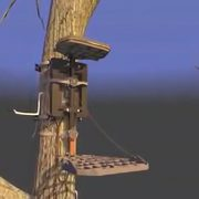 tree-stand-buddy01