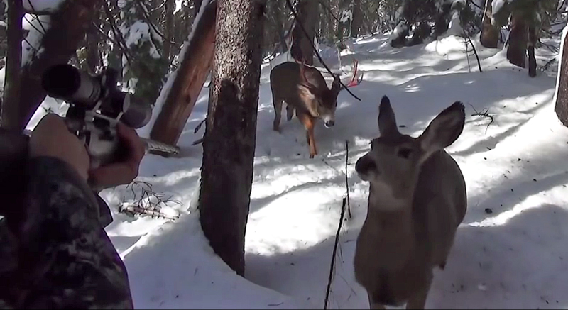 Watch: Close Encounter With Buck and Doe Caught on Video
