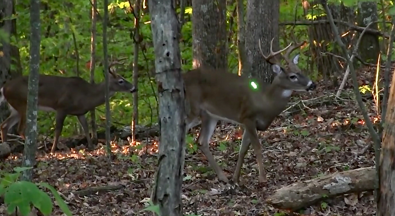 Watch: 17-Year-Old Hunter Self-Films a Public-Land Bow Buck