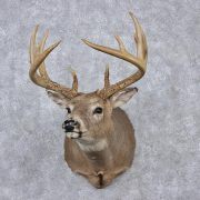 whitetail-deer-shoulder-taxidermy-head-mount-m1a-_12520-for-sale-_-the-taxidermy-store