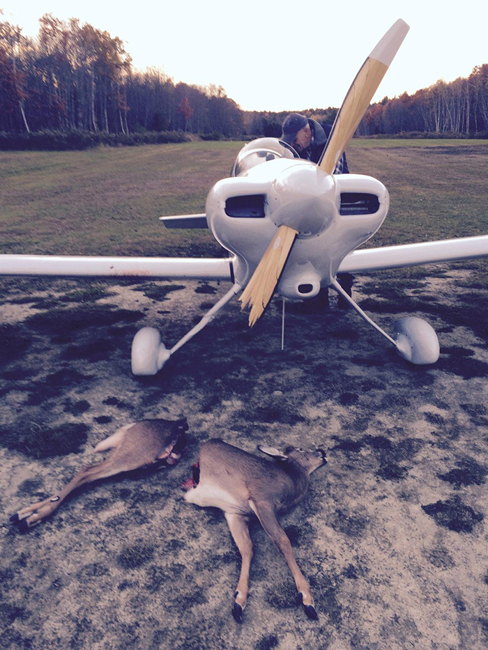 Photo: Deer Cut in Two by Airplane Propeller