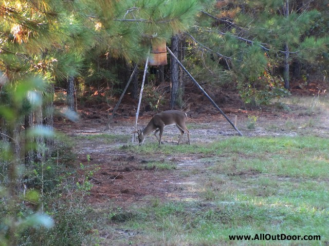 Deer Hunting With a Feeder