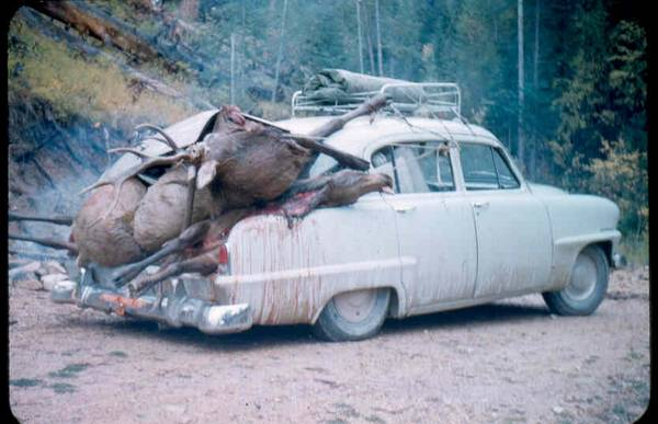 elk-in-car-trunk