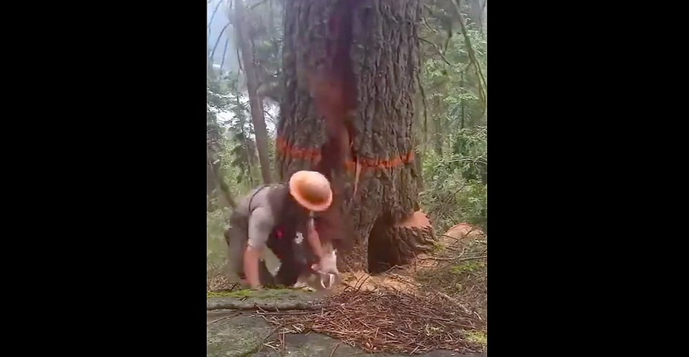 Watch: Tree Cutter Gets a Nasty Surprise From a Hollow Tree