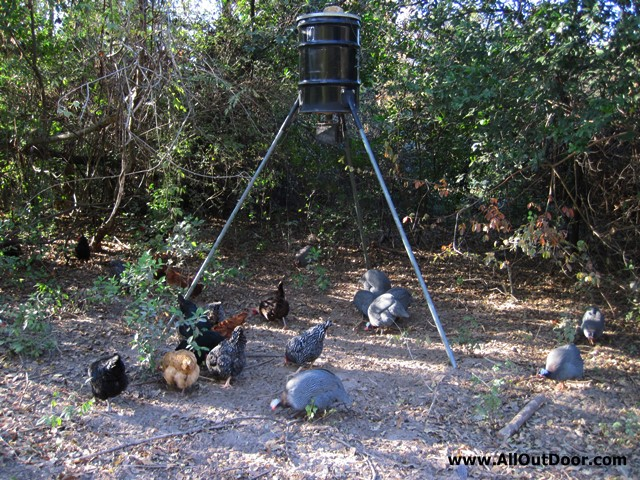 Deer Feeder for Feeding Chickens