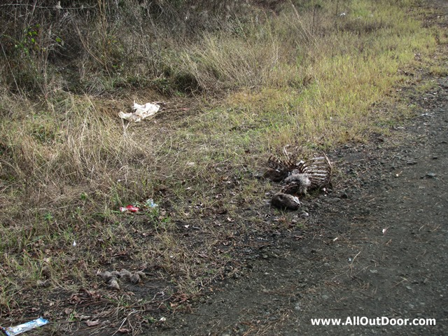 Deer carcass on rural road
