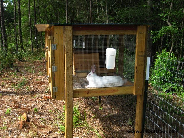 Preppers – Are Rabbits Worth the Trouble?