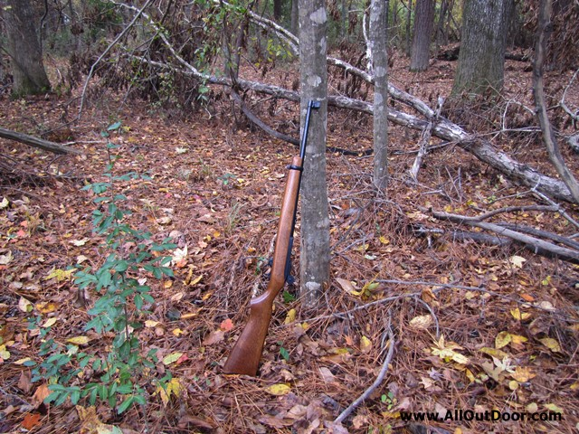 Squirrel hunting 22 rifle