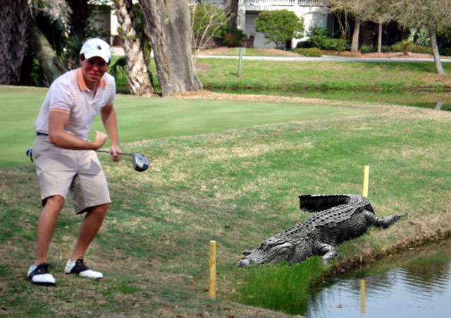 Golfer Attacked by Gator Wins with Swinging Putter