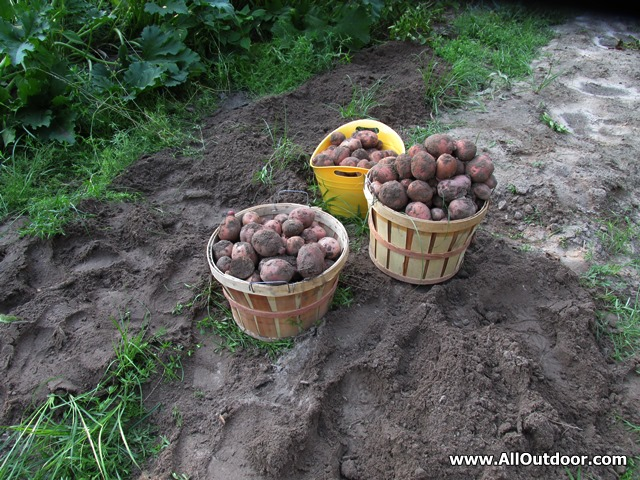 Time To Think About The Potato Patch