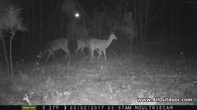 Deer on trail camera