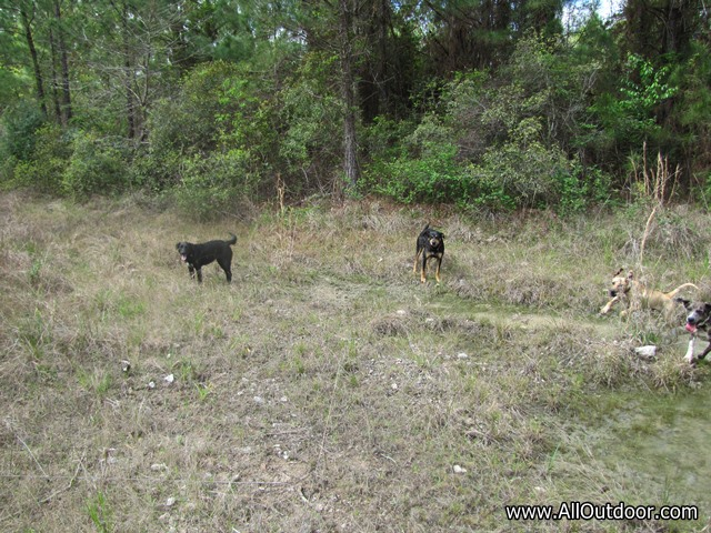 Preppers: Do You Take Your Dogs Scouting?