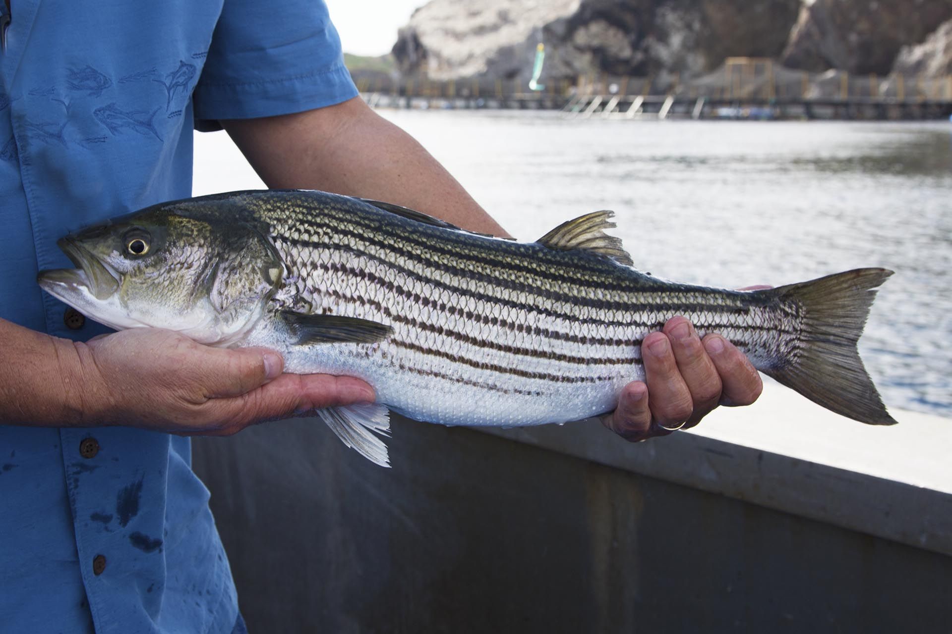 "Maryland Anglers Ready to ""Rock"" for Striped Bass"