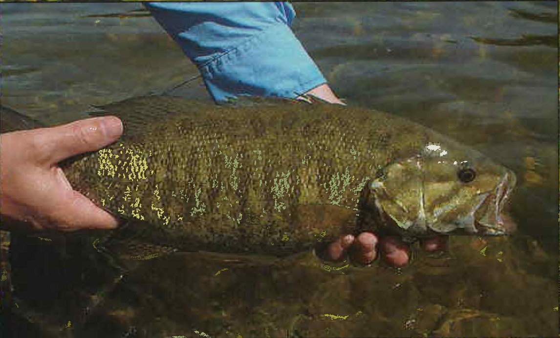 Catch-And-Release Spring Bass Action Peaking In Vermont