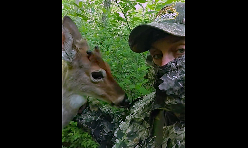 Watch: Young Deer Tries to Eat Hunter's Ghillie Suit