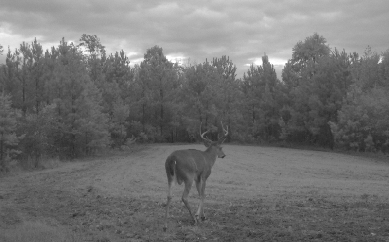 My 'Made-to-Order' Buck