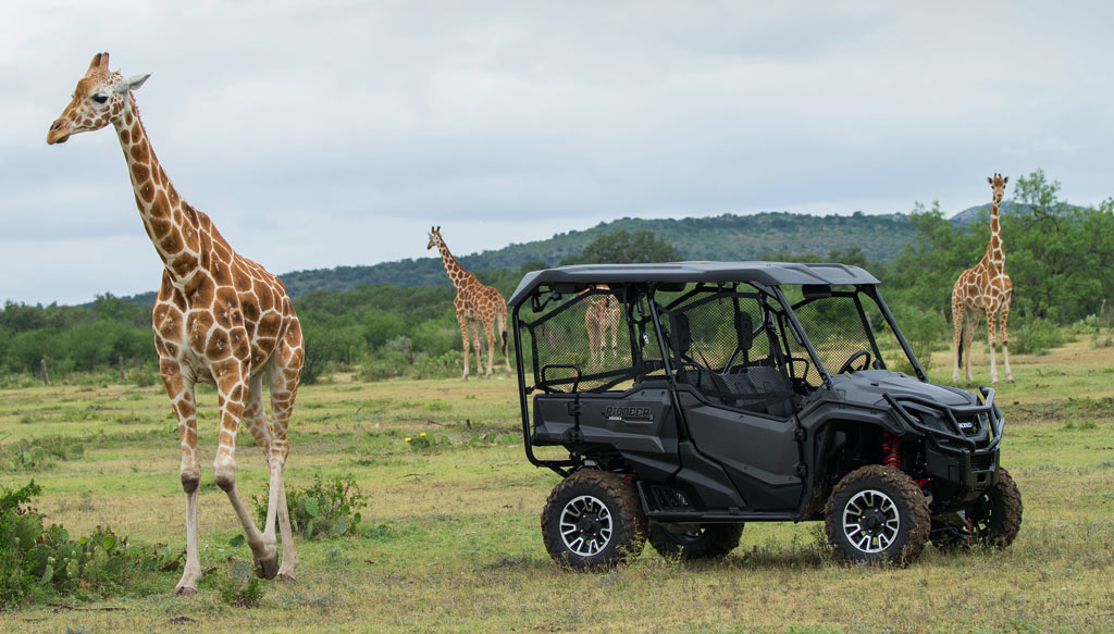 Honda Pioneer 1000-5 LE and Giraffe