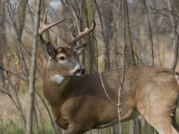 Applications available for Land Between the Lakes Deer Hunting
